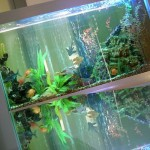 Какую роль играет аквариум в интерьере квартиры?